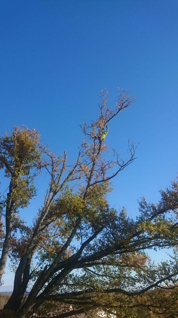 Prendre de la hauteur ?… Les arboristes/grimpeurs savent le faire !
